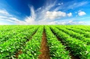 Future of Agriculture and Farming